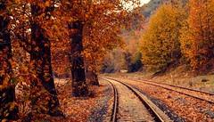(Okan AKGL) Tags: autumn trees plant tree fall texture nature leaves turkey landscape outdoor sony railway foliage serene sonbahar zonguldak alpha58
