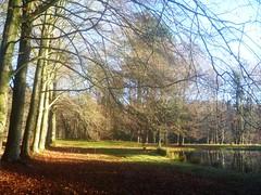 bovenvijver (Nelis Zevensloot) Tags: autumn automne herbst herfst veluwezoom winterlandscape lhiver winterlandschap rosendael rozendaal