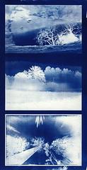 Cyanotype landscapes (batuda) Tags: landscape negative cyanotype digitalnegative altprocess laserjettransparency