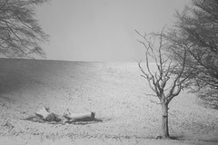 Life Becomes Death (.Brian Kerr Photography.) Tags: trees winter blackandwhite snow monochrome landscape mono outdoor cumbria xt1 fujix briankerrphotography fujiuk