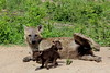 Hyena mother with babies (Peet van Schalkwyk) Tags: hyena hyenababy knp