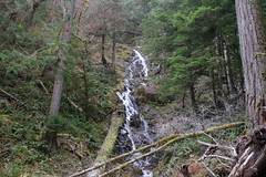 A small creek waterfalls off the mountainside (rozoneill) Tags: umpqua national forest north trail mott panther tioga segment oregon hiking backpacking douglas county glide idleyld park roseburg