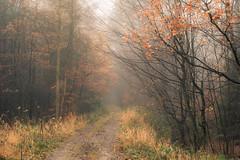 Nebulous Future (Netsrak (on/off)) Tags: forst natur nebel wald fog forest mist nature woods november autumn herbst eifel tree trees baum bäume leaf leaves blatt blätter yellow orange gelb path way weg waldweg