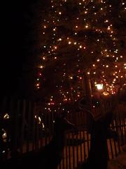 PC184578 (superba_) Tags: northpolenewyork santasworkshop christmas xmas xmas2016 snow