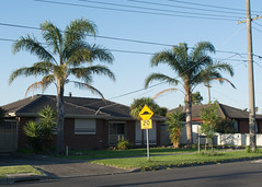 Looking forward to getting out of here (Jennifer Lea) Tags: thomastown suburbs melbourne northernsuburbsofmelbourne palm trees walks sigmaart30mm nikon d5200