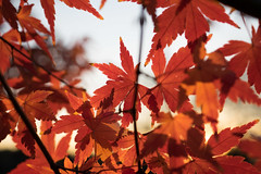 PC105662.jpg (plasticskin2001) Tags: leaf
