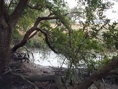 Wetlands (BunnyHugger) Tags: charleston dorothybkearnspark letterboxing southcarolina wandoriver