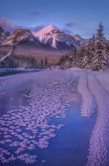 Winter blooms (Sapna Reddy Photography) Tags: banff alberta canada winter landscape nature mountain mountains rockies canadianrockies frozen ice snow frost crystals river nationalpark