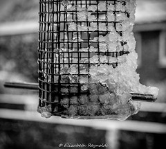 Day 13 (lizzieisdizzy) Tags: feed feeder birdfeeder ice water frozen drip dripping perch wire wiretube dof