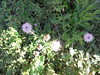 174 (en-ri) Tags: fiorellini little flowers sony sonysti verde viola foglie leaves