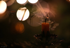 Disposal of 2016's residues - Epiphany - January 6th (clé manuel) Tags: christmas tree epiphany drei könige weihnachten weihnachtsbaum winter candle kerze blown out sony alpha
