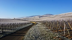 Paysage givré  -  Landscape frosted (Philippe Haumesser Photographies (+ 4000 000 views) Tags: outside vigne vignes vine vines vineyard vineyards vignoble paysage paysages landscape landscapes hiver winter chemin path nature wintzenheim alsace elsass france hautrhin 68 sonyilce6000 sonyalpha6000 sony panorama 169 2017