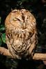 20161231-IMG_5083 (stringer8247) Tags: owl forest harajuku tokyo japan