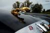 Gold and the Union Jack (le Brooklands) Tags: automobile britishinvasion car d7000 jaguar sigma1224mm stowe vermont
