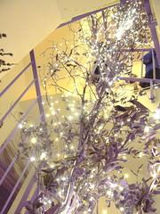 Lavendellichtexplosion c (AnnAbulf) Tags: fvg fjv friauljulischvenetien friuliveneziagiulia beleuchtung illuminazione albero baum lavendelhaus casadellalavanda lavendel lavanda tre´ppenhaus trombadellescale venzone carnia karn peuscheldorf