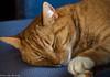 Sleeping all day long (2AnNa3) Tags: dromen droom dream dreaming cat kat rood red slapen slaap sleep