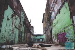 Week 4: Broken Down (bmurphy502) Tags: abandoned urban colorful gritty graffiti warehouse abandonedwarehouse downtown louisville broken brokendown green