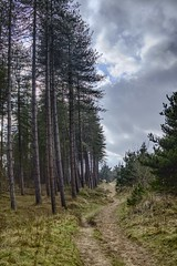 Newborough path (GarethBell) Tags: path sand wales newborough trees forest beach clouds sky walk outdoors outside country countryside godscountry anglesey distance possibilities 6d canon canon6d hdr 35m
