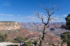 Desert Tree (joetografer) Tags: nikond750 nikon d750 grandcanyon tree trees desert horizon arizona