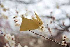 Rabbit and Plum (Ichigo Miyama) Tags: ウサギぎとウメ plum rabbit origami ウメ 梅 prunusmume バラ科 rosaceae 春 spring flower plant うさぎ 折り紙 おりがみ paper