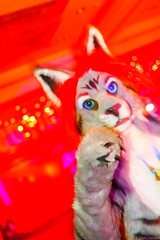 _MG_0718 (Tiger_Icecold) Tags: confuzzled cfz2016 cf2016 furcon furry convention fursuit birmingham party deaddog ddp deaddogparty