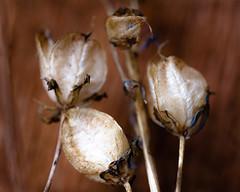 (Steven Schnoor) Tags: plant macro closeup flora