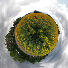 Sunflower planet (sonic182) Tags: flowers panorama sun flower field switzerland geneva little projection sunflower planet genf stereographic meyrin svjc stereographical summer2015