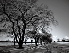 Willows on a late winter afternoon (-liyen-) Tags: trees winter blackandwhite snow toronto canada nature monochrome silhouette rural bravo searchthebest farm country willow snowing gamewinner interestingness76 123bw cy2 challengeyouwinner 3waychallenge matchpointwinner impressedbeauty aplusphoto weeklychallengewinner flickrchallengegroup 3wayassignment27 youvsthebest faceoffwinner photofaceoffwinner photofaceoffgold photofaceoffchallenge photofaceoffplatinum pfogold cyspecialchallenge3rd youvsbesthof lpshadows2 t468 thepinnaclehof storybookwinner ispywinner