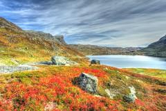 IMG_1053 Haukelifjell (JarleB) Tags: autumn hordaland hst haukeli haukelifjell ulevvatnet