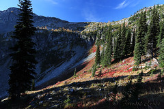 424B6469 (forrest.croce) Tags: mountains larches northcascades noca fall color larch