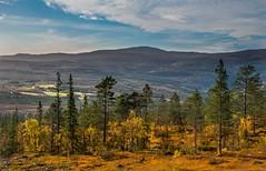 Autumn Scenery (bjorbrei) Tags: autumn trees mountains norway forest flora selbu flaknan