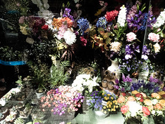 Planta (Paulo Octavio) Tags: street flower color planta uruguay calle reflex flor documentary montevideo reflexo cor ua uy montevideu