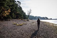 Harjun kivinen ranta (timoppi) Tags: nature finland helsinki outdoor balticsea syksy vuosaari kallahti ulkoilu
