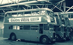 London transport RTW's 29,335 and 467 Bromley garage 21/11/15. (Ledlon89) Tags: bus london transport rtw lt leyland londonbus londontransport londonbuses vintagebus lte leylandtitan rtbus bsues