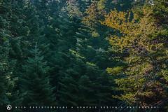 Morning at the mountain 2 (nikhrist) Tags: trees mountain nick greece parnitha attiki christodoulou