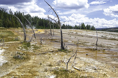 Desolate slope (Alan Vernon.) Tags: park orange hot water yellow spring steam mat national micro yellowstone algae wyoming bacteria geothermal mats boiling boil microorganisms organisms cyanobacteria algal thermophilic