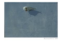 Dito e feito... (Loester) Tags: bird portugal europa lisboa passarinho ave vasco passaro gama eurpe