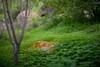 natural garden zen (susodediego ) Tags: grancanaria caldera canaryislands autofocus bandama cráter greatphotographers thegalaxy frameit simplysuperb gününeniyisi olétusfotos vividstriking allnaturesparadise sigma35mmf14dghsmart vpul01 infinitexposure nikond750