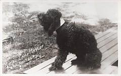 Boone, Iowa, Camp Hantesa, Mascot, Kimbo, Dog (photolibrarian) Tags: dog mascot kimbo camphantesa booneiowa