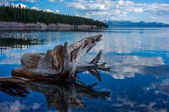 _DSC0938W (jsgz) Tags: lake yellowstone np