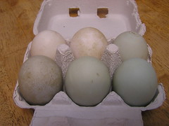 Farm Duck Eggs - Egg Box - her 18-12-2015 (Lord Inquisitor) Tags: blue white green duck eggs eggcarton duckeggs eggbox