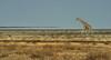 the incredible Etosha Pan (me*voilà) Tags: namibia etosha etoshanationalpark landscape fatamorgana giraffe minimal saltpan