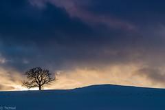 my favourite tree (Tschissl) Tags: schnee baum leoben location österreich winter steiermark