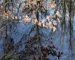 Ein sonniger Wintertag (Sockenhummel) Tags: fuji x30 fujifilm finepix fujix30 winter spandau wasser see spiegelung reflektionen reflection ufer laub blätter kuhlake kladow hakenfelde berlin natur