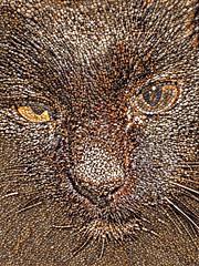 Assam with Rocks on her Head (sjrankin) Tags: 29january2017 edited processed filtered california northerncalifornia closeup animal cat assam pebbles rocks