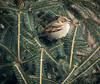 sparrow (brendacyr) Tags: backyardbirds birds smallbirds winter sparrow