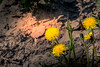 Up on the Hill (dareshorunke) Tags: seward alaska fishing sea ocean beach waterside rocks seagulls flowers beautiful world optic canvas