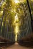 Bamboo Allure (Astarotte73) Tags: japan summer arashiyama saga worldheritage walk kyoto bamboogroves forest green path zen relaxeness calmness silence flare sunrays foliage shadow sigma1224f456exdghsm