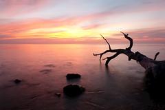 Tree Trunk (fredMin) Tags: sunset long exposure tree landscape trunk fujifilm xt1