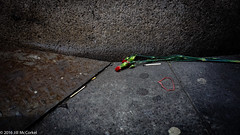 BowieMemorial-01424 (Jilly in Philly) Tags: bowie davidbowie bowieforever soho memorial ziggystardust deadroses dustandroses goonsquad sunmachine nyc newyork